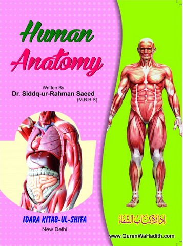 Tashreeh ul Badan Colored, Human Anatomy