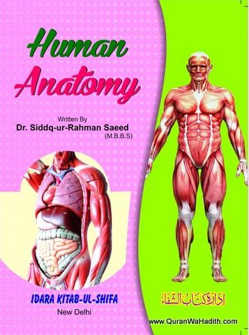 Tashreeh ul Badan Colored, Human Anatomy